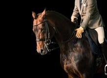 Cavaliere su un cavallo Fotografia Stock