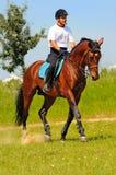 Cavaliere sul cavallo allegro della baia Immagini Stock Libere da Diritti