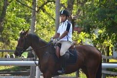 Cavaliere sul cavallo marrone Immagini Stock