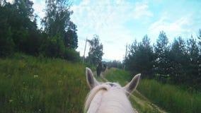 Cavaliere sulla fucilazione e sulla guida del cavallo bianco nella foresta video d archivio