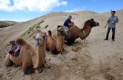 Cavalieri del cammello Fotografia Stock