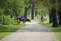 Cavalieri del cavallo Immagini Stock