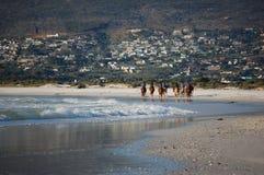 Cavalieri del cavallo alla spiaggia con le montagne nel Sudafrica, Cape Town immagine stock libera da diritti