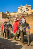 Cavalieri dell'elefante in Amber Fort vicino a Jaipur, India Fotografia Stock