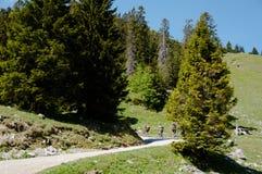 Cavalieri della bici di montagna Fotografia Stock