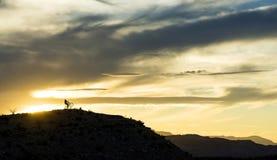 Cavalieri di tramonto del deserto Fotografia Stock Libera da Diritti