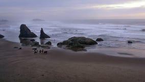 Cavalieri e surfista Fotografie Stock Libere da Diritti