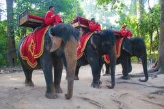 Cavaliers cambodgiens d'éléphant Photo libre de droits
