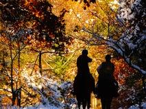 Cavaliers dans une forêt d'automnal avec la neige photos libres de droits