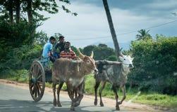 Cavaliers de chariot de Bullock Images libres de droits