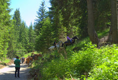Cavaliers de chemin de montagne Photographie stock libre de droits