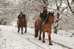 Cavaliers de cheval dans la forêt Images stock