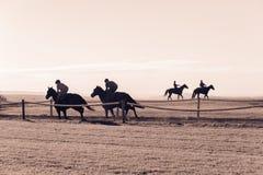 Cavaliers de cheval de course courant la voie de formation Images libres de droits