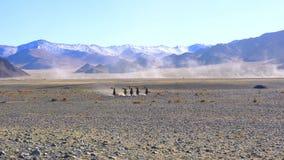 Cavaliers de Mongolians dans l'habillement traditionnel avec leurs aigles d'or montant à cheval banque de vidéos