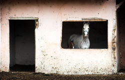 Cavalla con il suo foal immagine stock libera da diritti