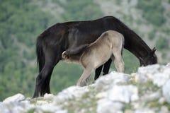 Cavalla e foal Immagine Stock Libera da Diritti