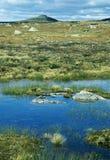 Cavalla e licheni arancioni in Hardanger-Vida, Norvegia Fotografie Stock