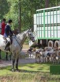 Cavallerizzi con i cani da caccia di un puntatore di inglese Fotografia Stock