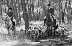 Cavallerizzi con i cani inglesi del puntatore nell'azione Immagine Stock