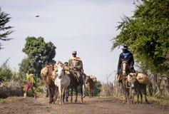 Cavallerizzi etiopici Immagini Stock