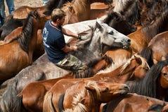 Cavallerizzo che monta un cavallo selvaggio Immagini Stock Libere da Diritti