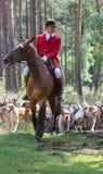 Cavallerizzo con i cani da caccia inglesi del puntatore Fotografia Stock Libera da Diritti