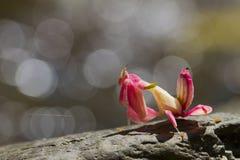Cavalletta in Tailandia Fotografie Stock Libere da Diritti