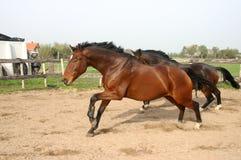 Cavalli immagine stock libera da diritti