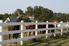 Cavalli ad un'azienda agricola fotografia stock libera da diritti