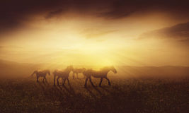 Cavalli al crepuscolo immagine stock libera da diritti