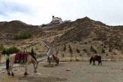 Cavalli al palazzo di Yumbulakhang, Tibet fotografie stock libere da diritti