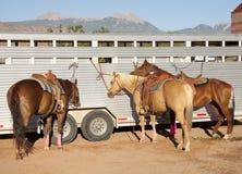 Cavalli al rodeo Immagine Stock Libera da Diritti