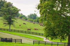 Cavalli all'azienda agricola del cavallo Paesaggio del paese Fotografie Stock Libere da Diritti