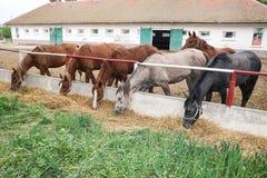 Cavalli alla rete fissa Fotografia Stock Libera da Diritti