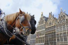 Cavalli a Anversa Fotografia Stock Libera da Diritti