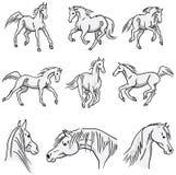 Cavalli arabi galoppanti Fotografia Stock