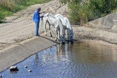 Cavalli beventi in bacino dell'acqua, Andalusia, Spagna Immagini Stock Libere da Diritti