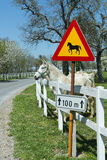 Cavalli bianchi Fotografia Stock