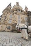 Cavalli bianchi davanti a Frauenkirche, Dresda, G Fotografia Stock