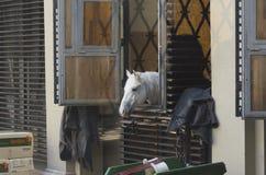 Cavalli in cablaggio Fotografia Stock