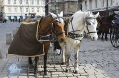 Cavalli in cablaggio Fotografie Stock