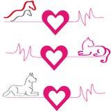 Cavalli, cane e gatto con i cuori su fondo bianco Fotografia Stock