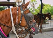 Cavalli che aspettano i loro cavalieri immagine stock libera da diritti