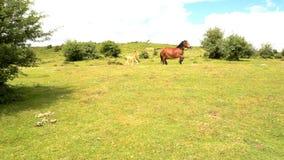 Cavalli che corrono dal supporto stock footage