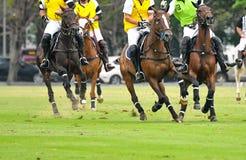 Cavalli che corrono in un polo Fotografia Stock