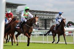 Cavalli che galoppano alle corse di York, Inghilterra, agosto 2015 Immagini Stock