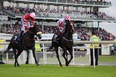 Cavalli che galoppano alle corse di York, Inghilterra, agosto 2015 Immagini Stock Libere da Diritti