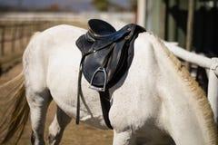 Cavalli che mangiano erba nel ranch Fotografia Stock