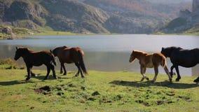 Cavalli che pascono e che trottano archivi video