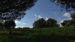 Cavalli che pascono nel bello paesaggio stock footage